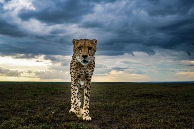 Hermis-Masai-Mara-Sony-01 (2).jpg